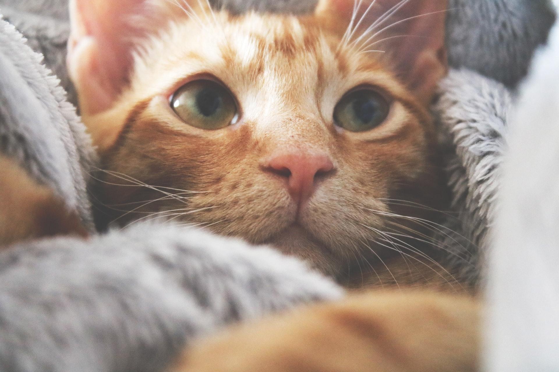 猫系男子の特徴は?恋愛傾向と顔で見る特徴&マイペース猫系男子と付き合うステップ